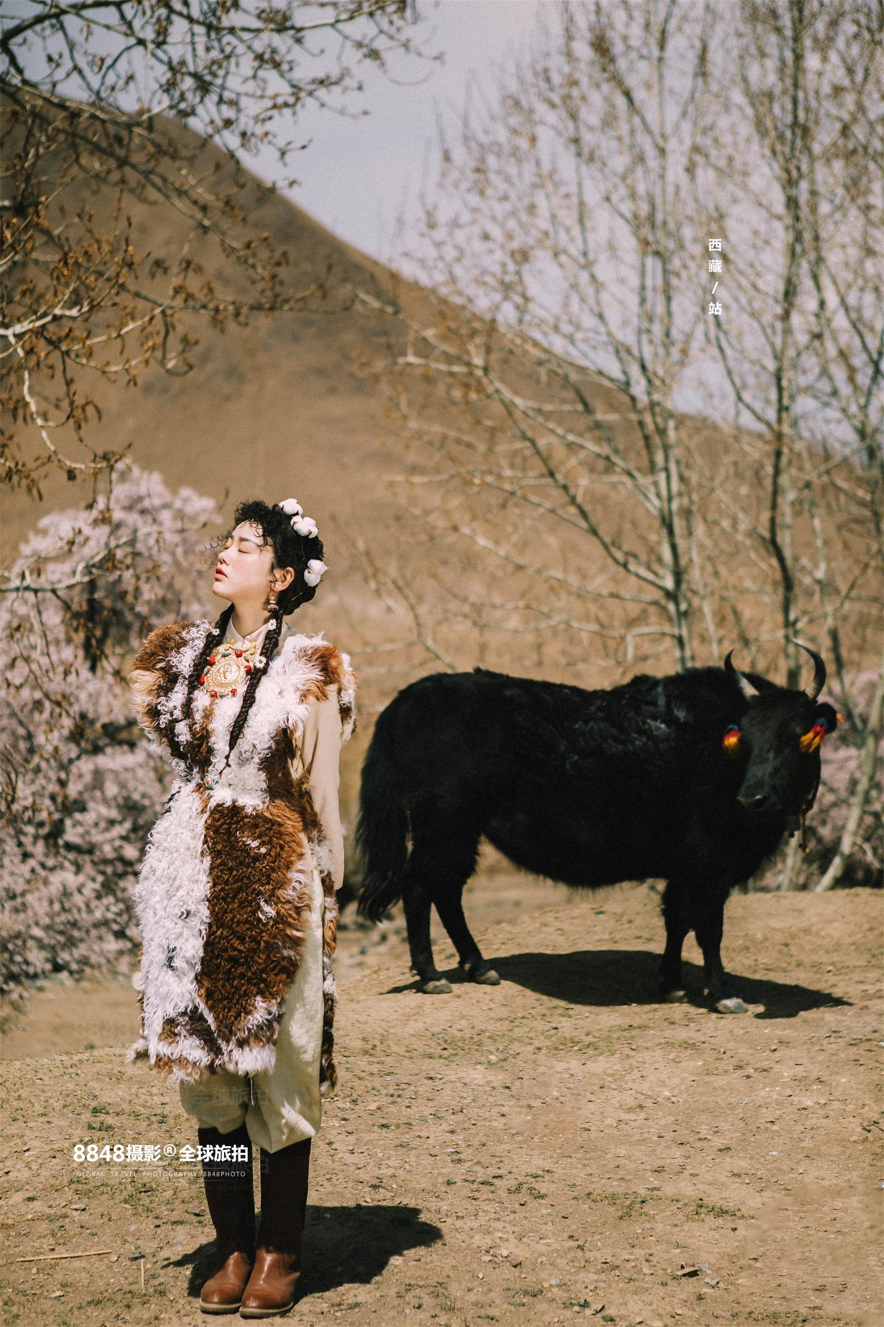 西藏│放牛的卓玛拉